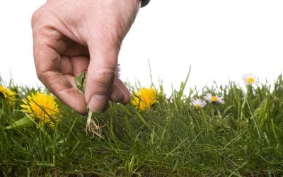 Organic Weed Control: How to Control Weeds Without Using Chemicals