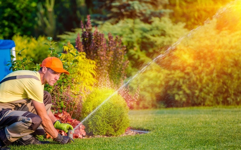 Grass Watering Tips