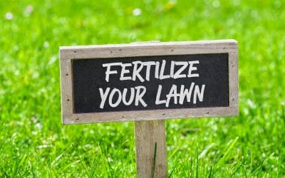 What Steps Are You Taking To Prepare Your Lawn For Spring?