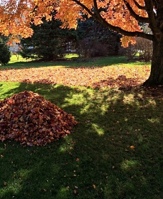 A pile of leaves ready to be removed from a property during the fall.