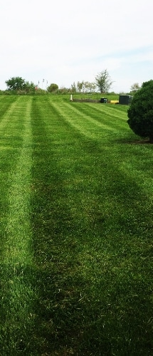 A large weed free yard with vividly green grass.