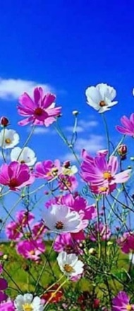 Spring Flowers and Blue Sky