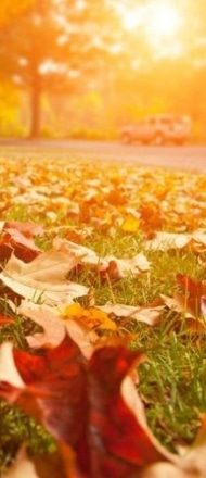 Leaves covering the ground during a fall morning.
